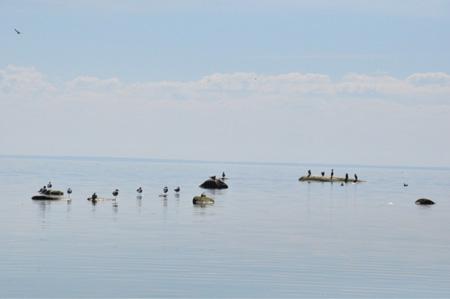 Финский залив: поездка на машине