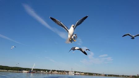 Соловки - морские экскурсии и чайки