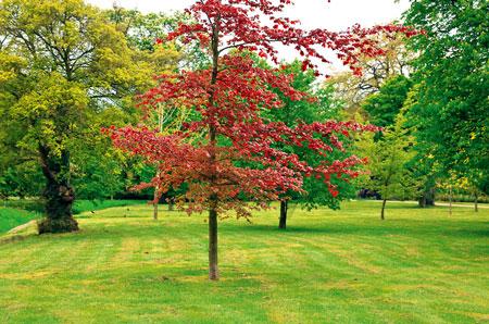 Стрижка газона осенью