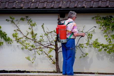 Обработка от вредителей весной