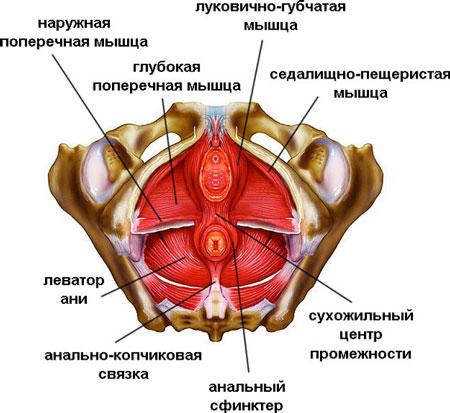 snyat-napryazhenie-mishts-analnogo-otverstiya