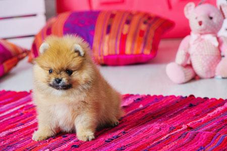 Средства от клещей для собак