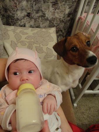 Купить собаку во время беременности