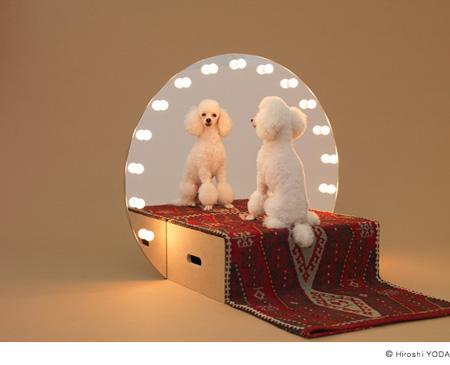 Идеальный вариант для собаки