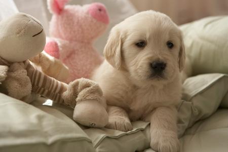 Купить щенка