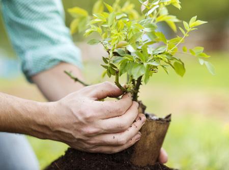 Какие плодовые деревья можно сажать в подмосковье