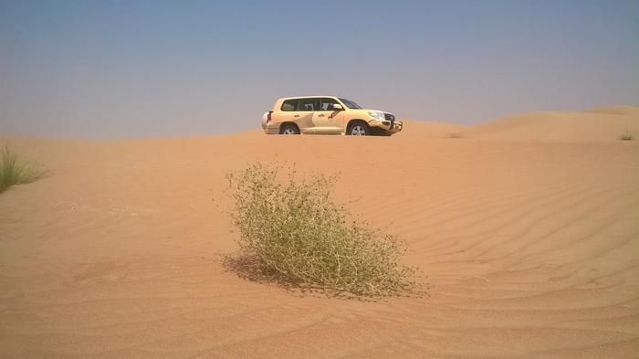 Дубай сафари