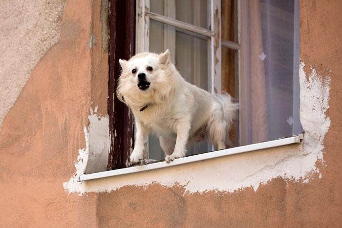 Поведение собаки и дрессировка