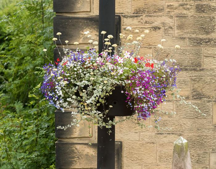 Когда сажать рассаду цветов