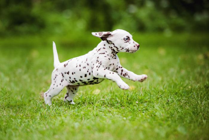 Как приучить щенка