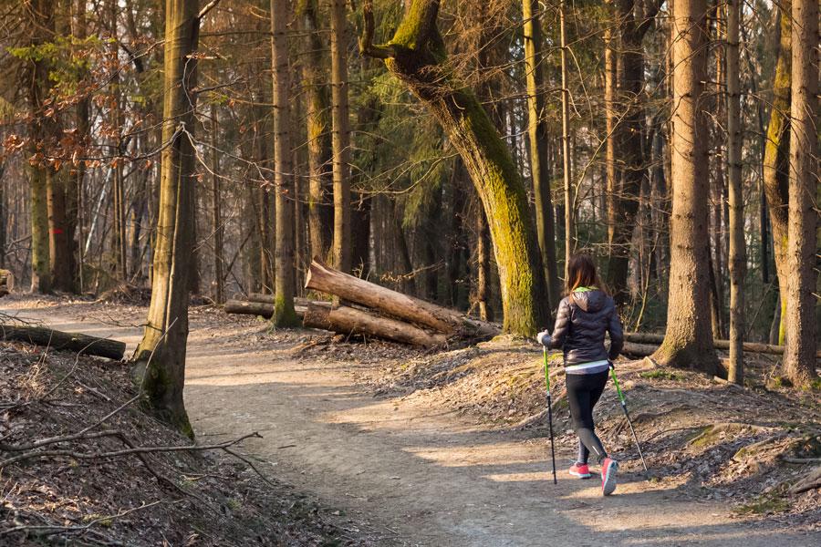 Как подобрать палку для ходьбы