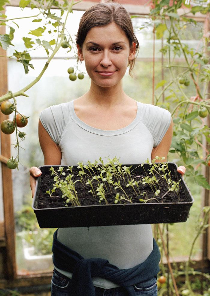 Чем подкормить рассаду