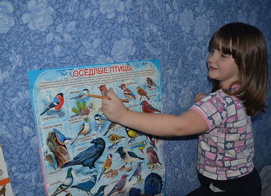 Наблюдения за птицами