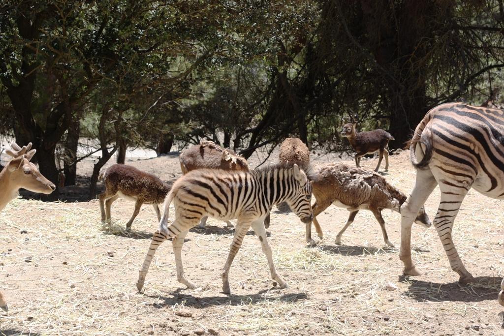 Сафари-парк и зоопарк