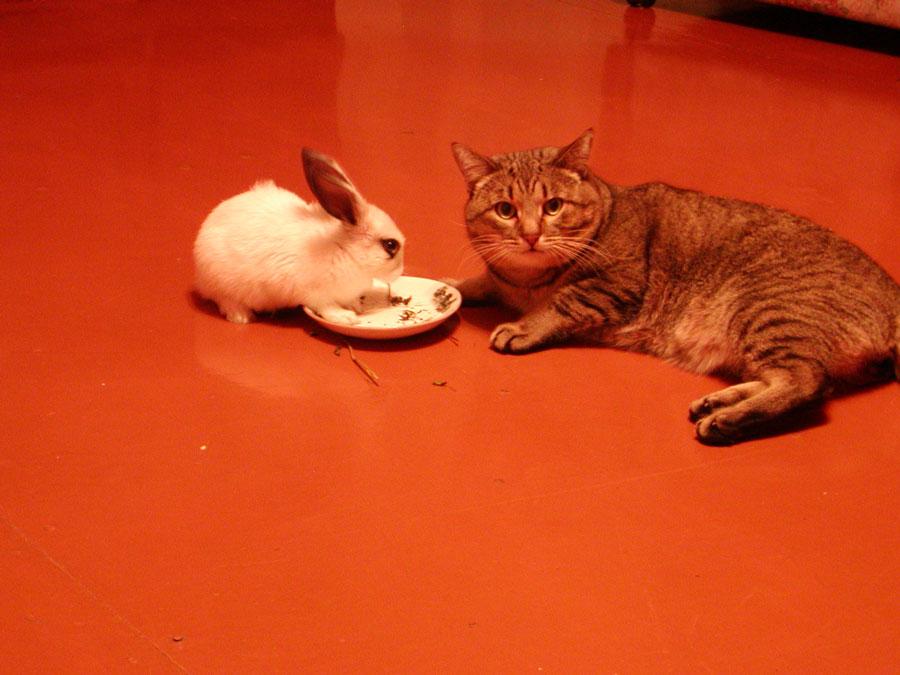 Содержание кролика