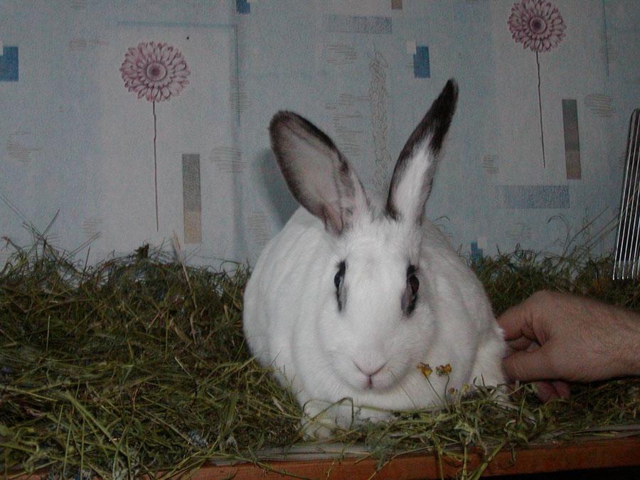 Содержание кролика в домашних условиях