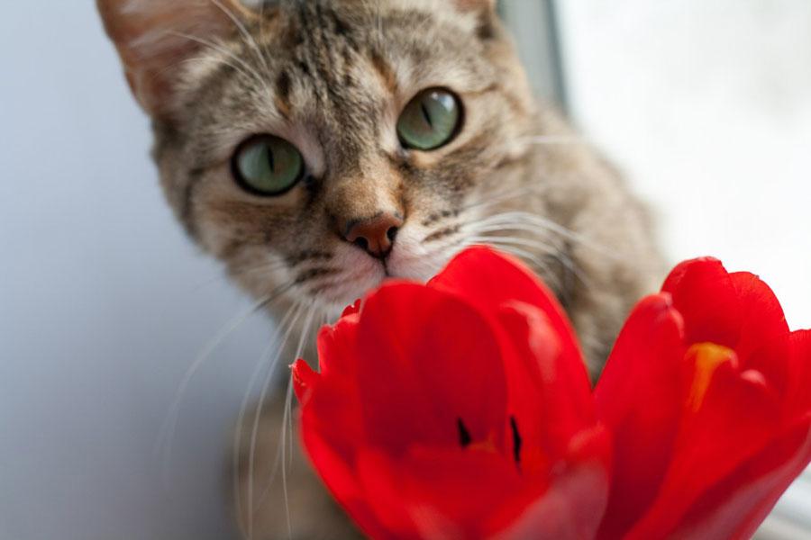 История глазами кошки