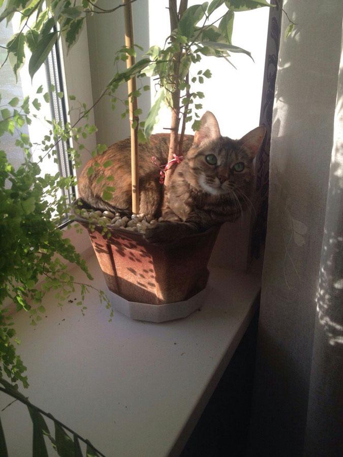 Кошка упала с балкона