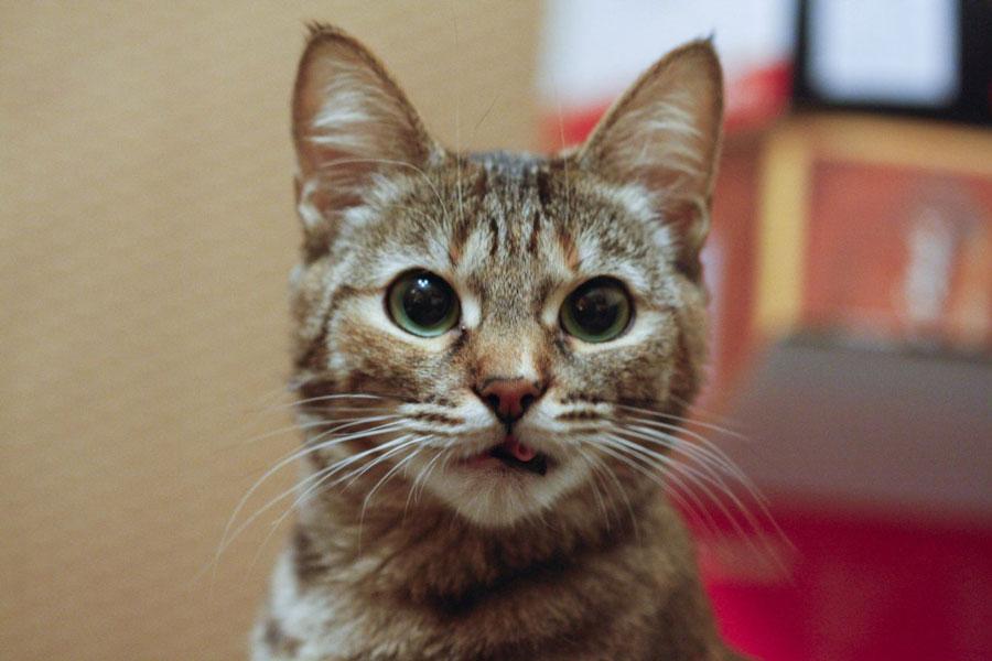 Жизнь домашней кошки