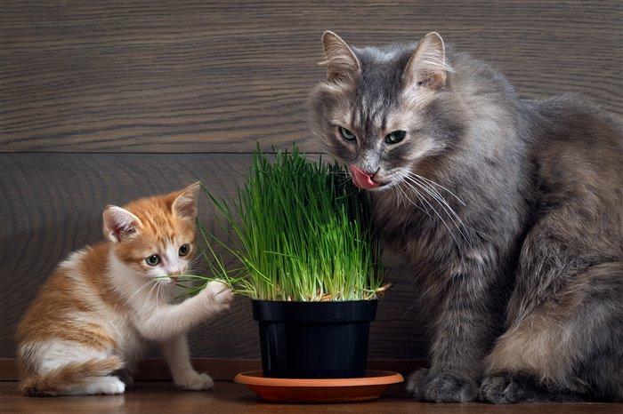 Зачем коты едят траву