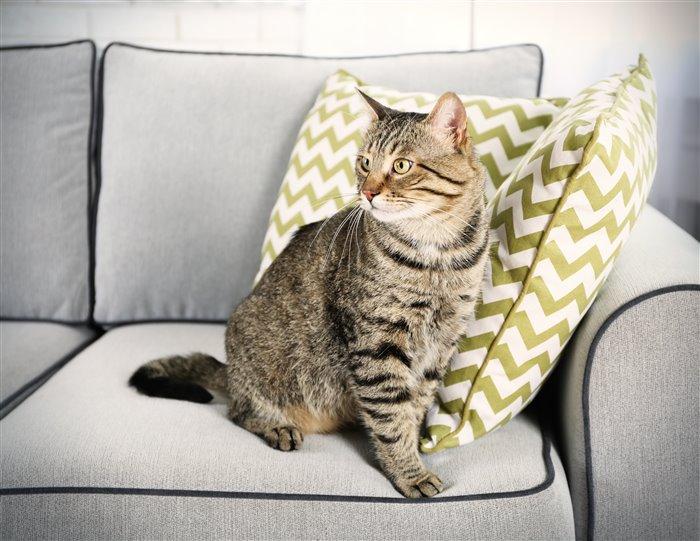 Как убрать кота с кресла