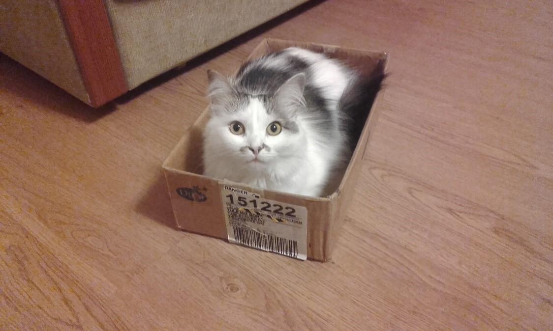 Рассказы о домашней кошке