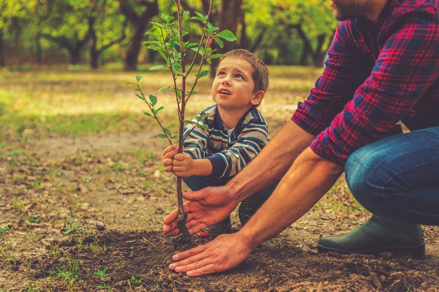 Как сажать деревья весной