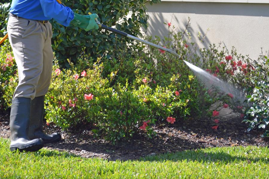 Чем опрыскивать сад весной