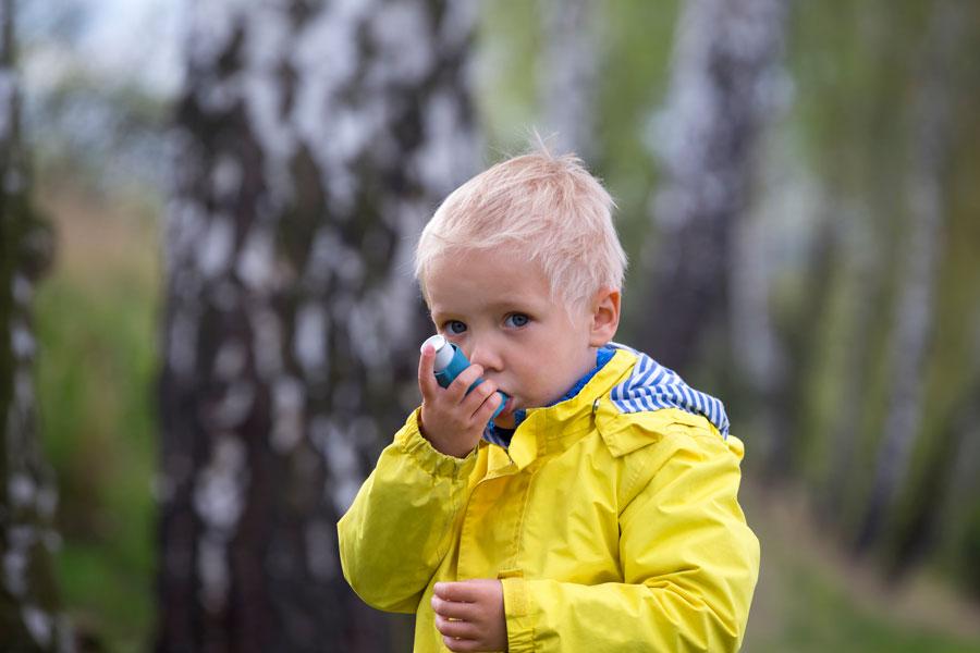 аллергия на березу препараты