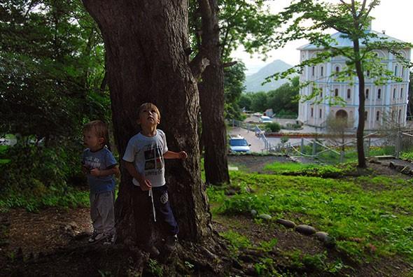 Тесамые афонские кедры— они очень выделяются среди других деревьев