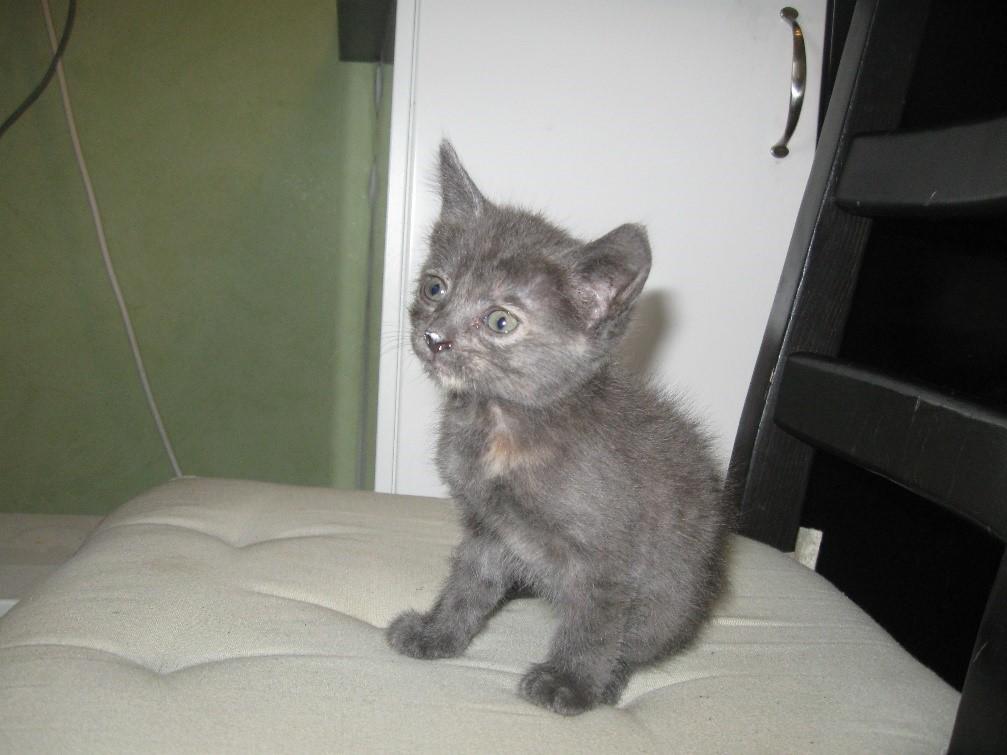 Маленький красивый котенок