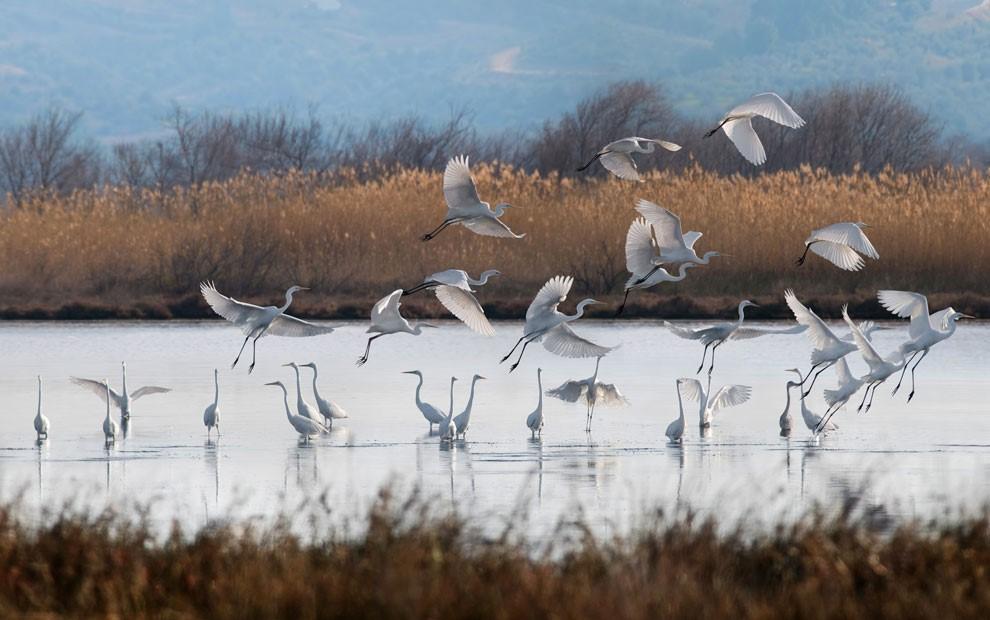 Ялова лагуна: птицы иприродные красоты