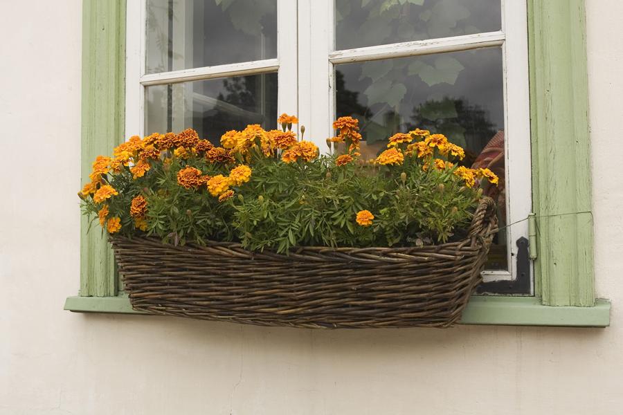 Как правильно посадить цветы вуличные кашпо