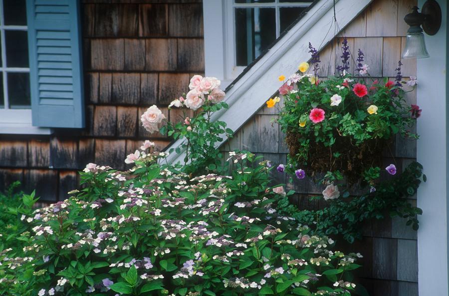 Какие цветы посадить вконтейнеры