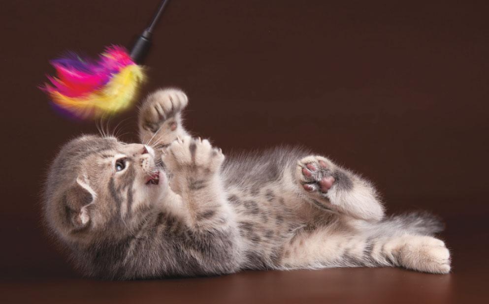 Возраст кошки: что происходит?