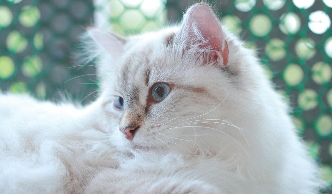 Домашний осмотр кошки: симптомы заболеваний