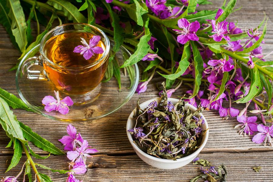 Как сушить цветы иван чая