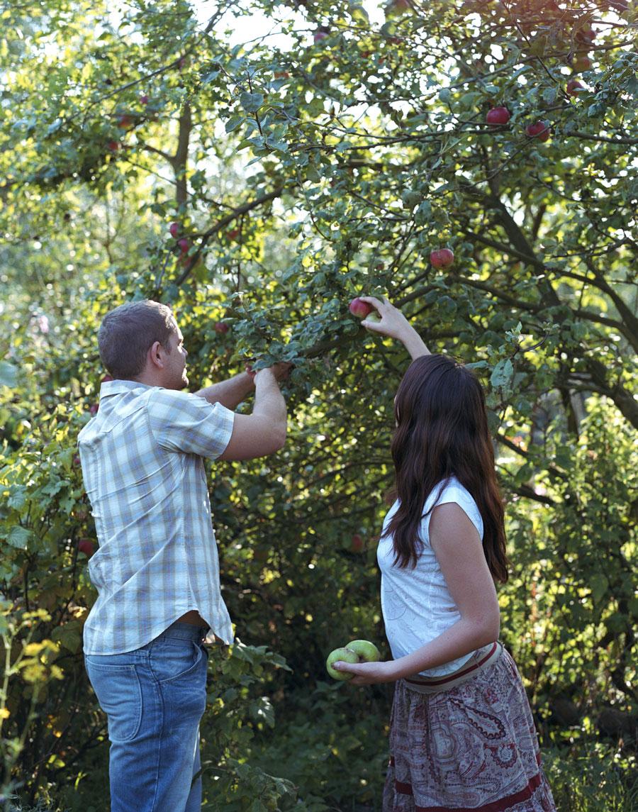 Посадка яблони втени задомом