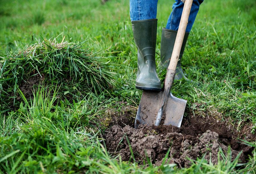 Определение кислотности почвы, раскисление почвы золой