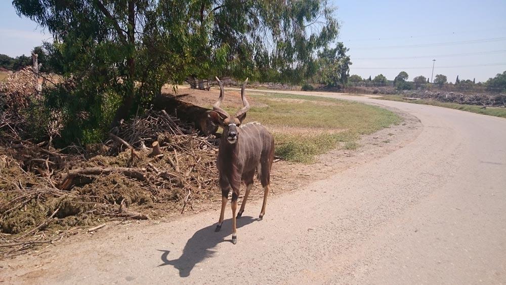 Сафари-парк— животные наволе!