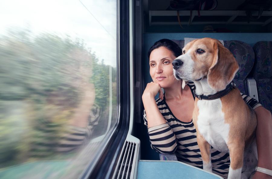 Собака впоезде