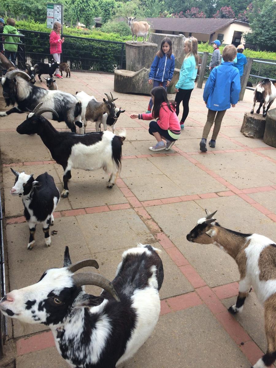 Зоопарк Хагенбека вГамбурге