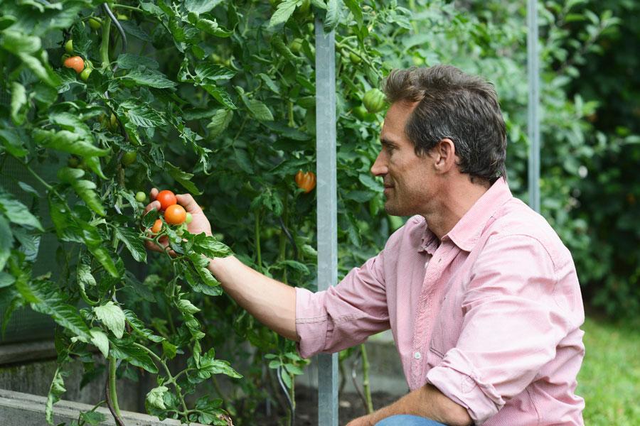Подкормка помидоров иогурцов