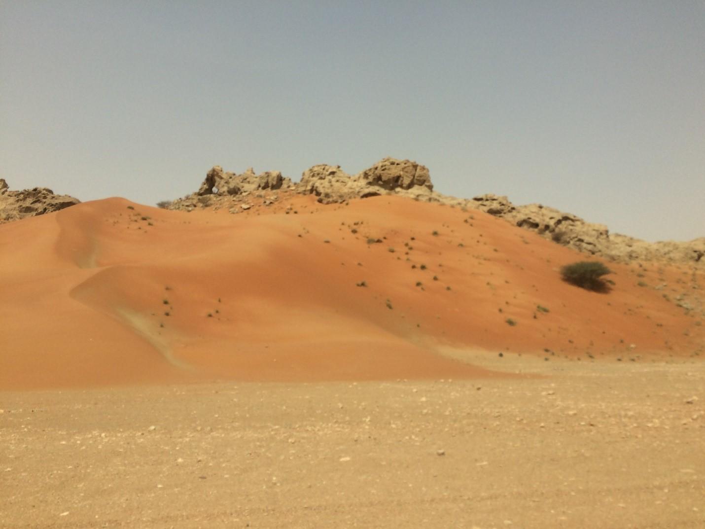 Экскурсия впустыню: археологический центр Млеха