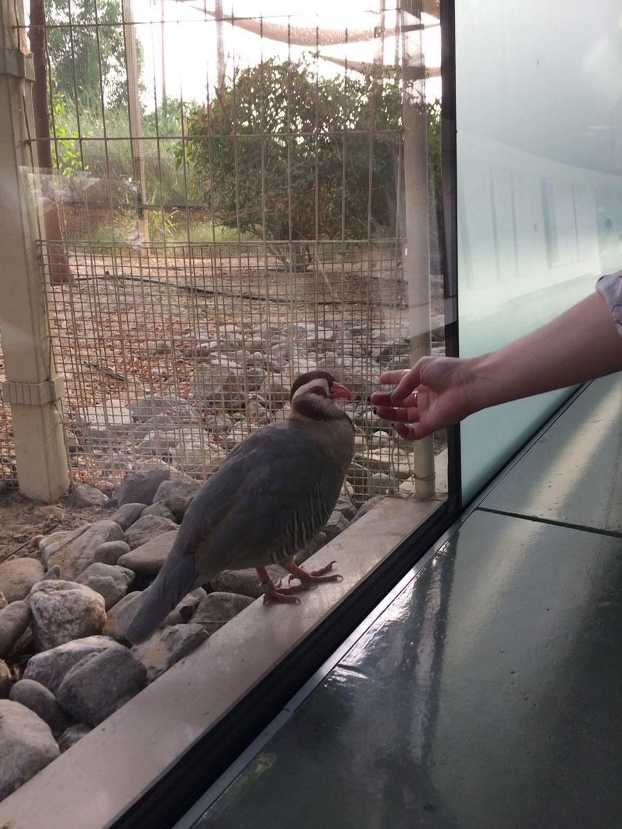 Заповедник дикой природы ипарк птиц
