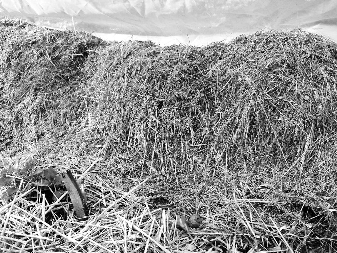 Мульча назиму: солома искошенная трава