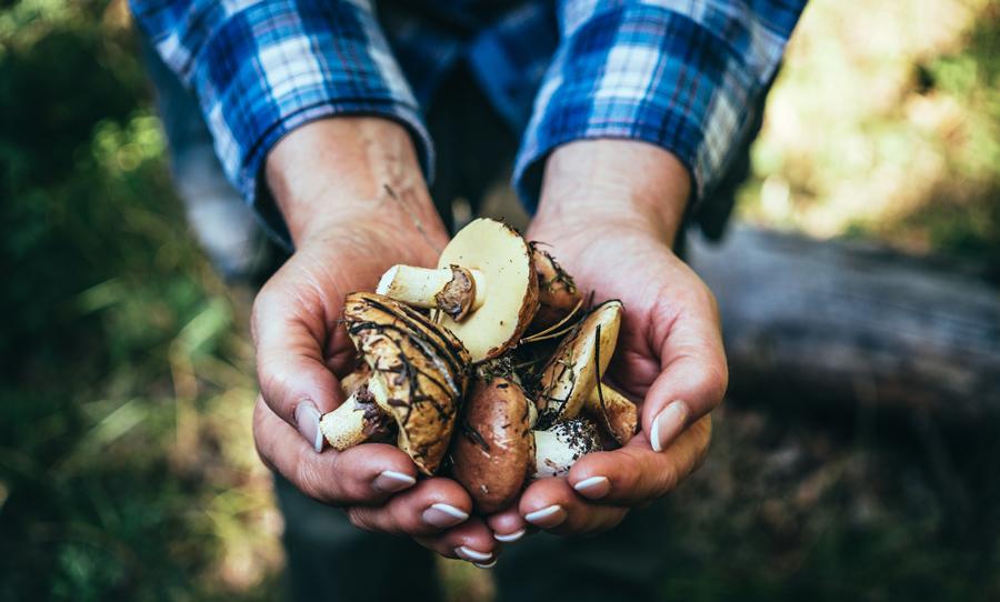 Как солить белые грибы: 2способа