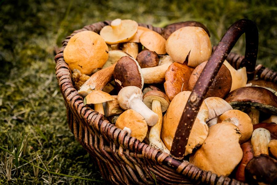 Засолка грибов: грузди