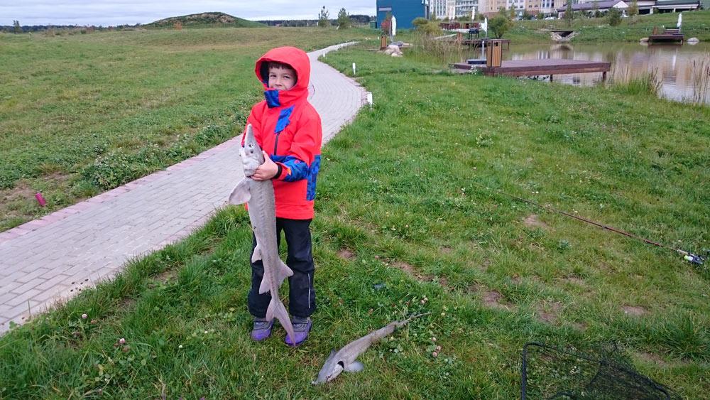 Рыбалка нареках изарыбленном пруду