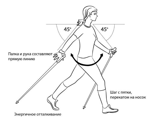 Общий вид выполнения техники скандинавской ходьбы